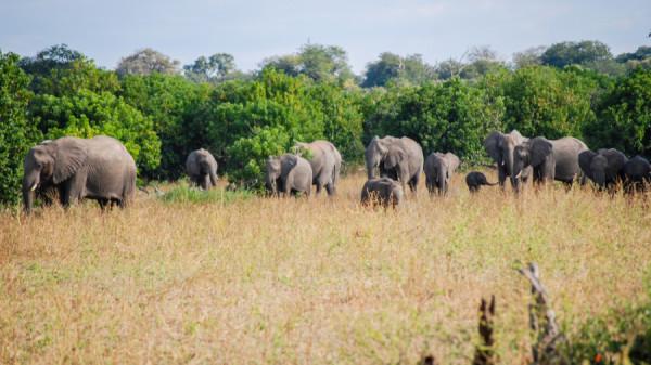 Elephant herd - Botswana Safari Tours